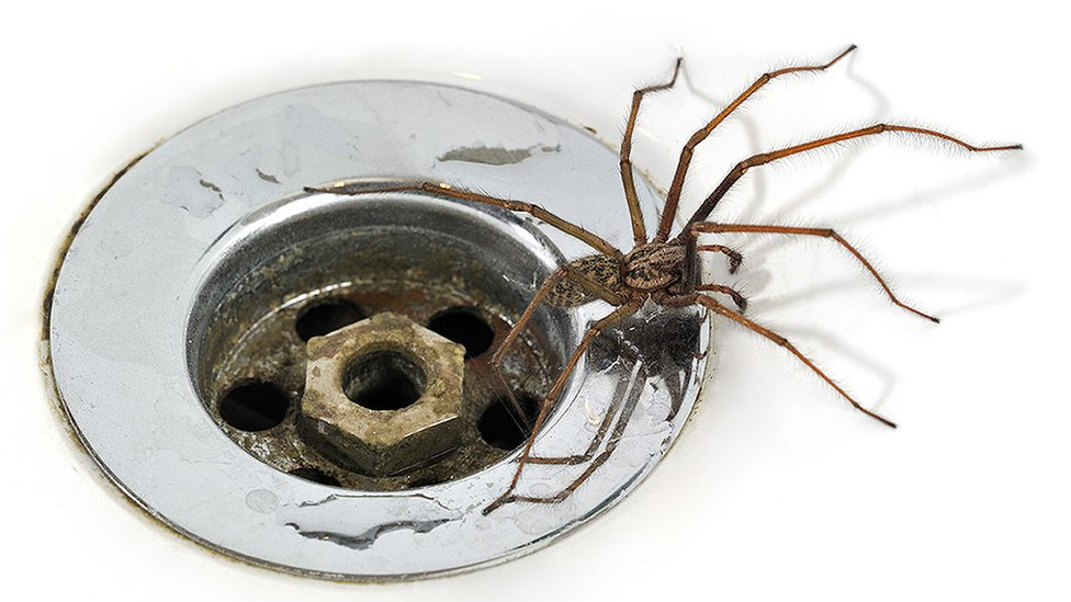 Spider and plughole