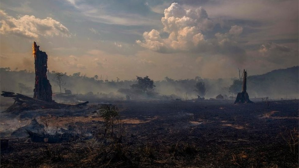 View of a burnt area of forest in Altamira, Para state, Brazil, on August 27, 2019. - Brazil will accept foreign aid to help fight fires in the Amazon rainforest on the condition the Latin American country controls the money, the president's spokesman said Tuesday.
