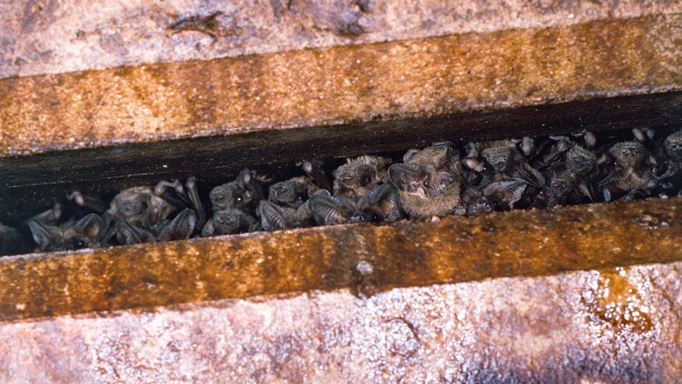 Murciélagos entre las vigas de concreto bajo el puente de la Avenida del Congreso