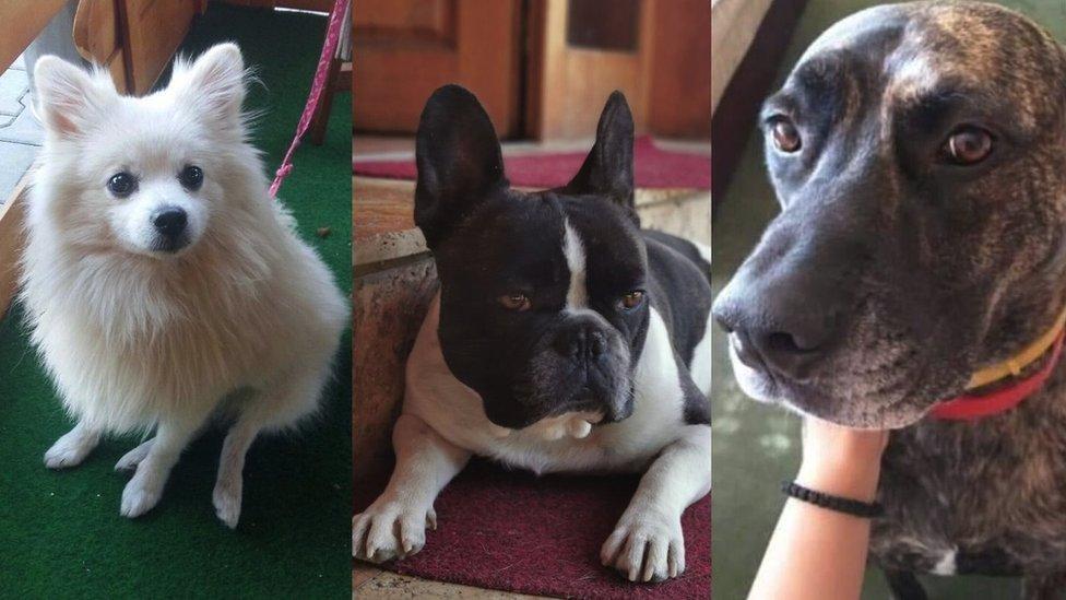 ukradeni psi