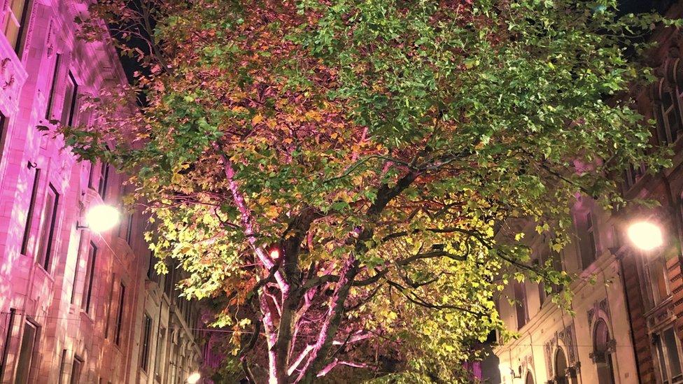 New Street trees
