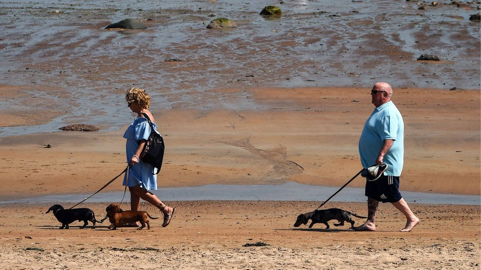 Dog walkers on East Sands Beach in St Andrews