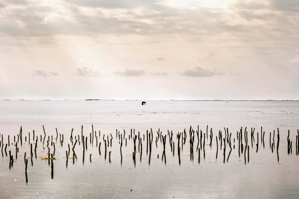 A lone woman searches for octopus