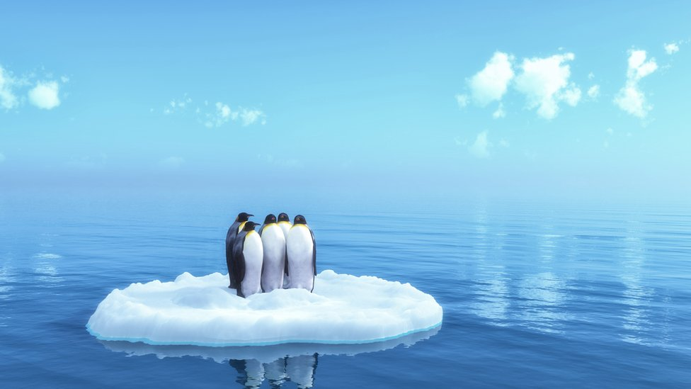 Pingüinos varados en un bloque de hielo.