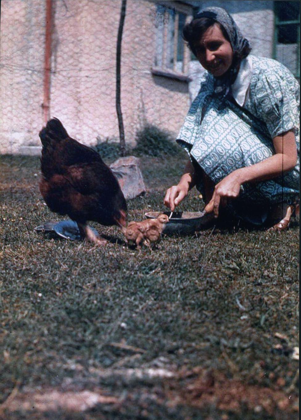 Margaret Hodž hrani piliće