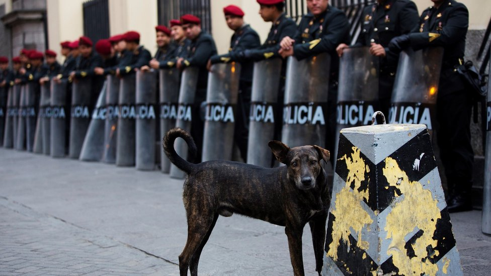 A stray dog stands near a line of policemen in Peru
