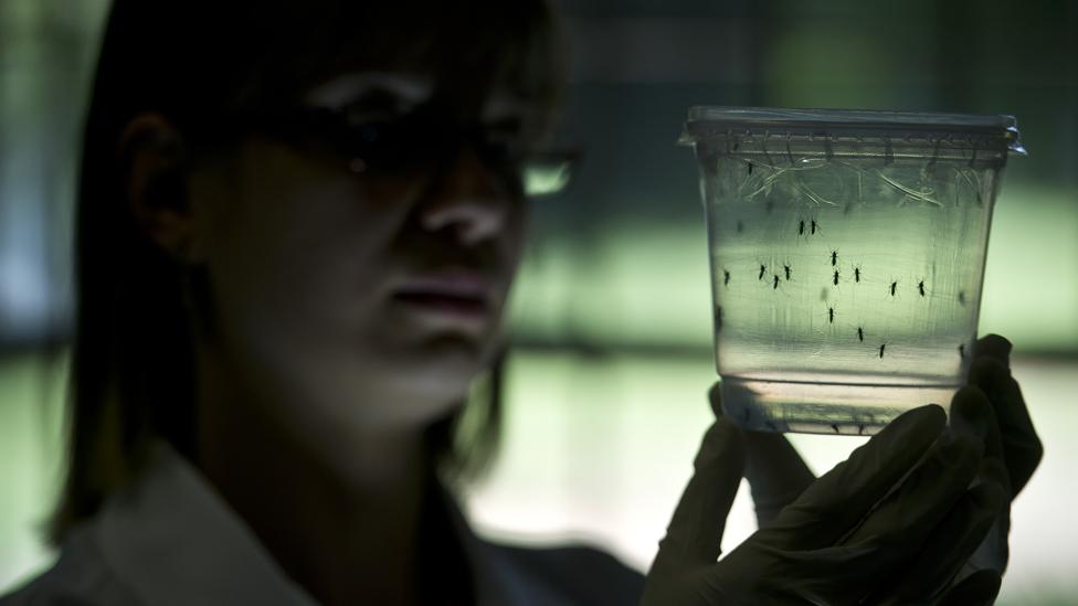 Scientist holds mosquitos in jar