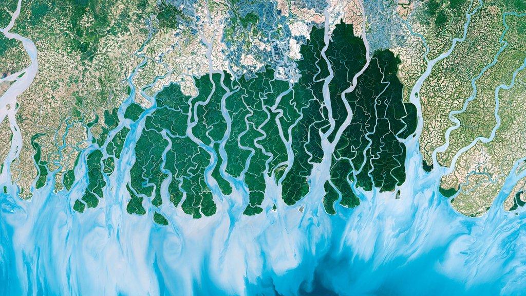 Esta hermosa imagen es de Sundarbans, el delta fluvial más grande del mundo, que se divide en India y Bangladesh.