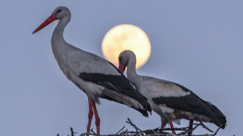 """Equinoccio de primavera y otoño: qué es la """"luna de gusano"""", la superl ..."""