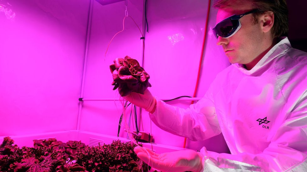 Engineer Daniel Schubert holds lettuce at the German Aerospace Center on July 21, 2014 in Bremen, Germany