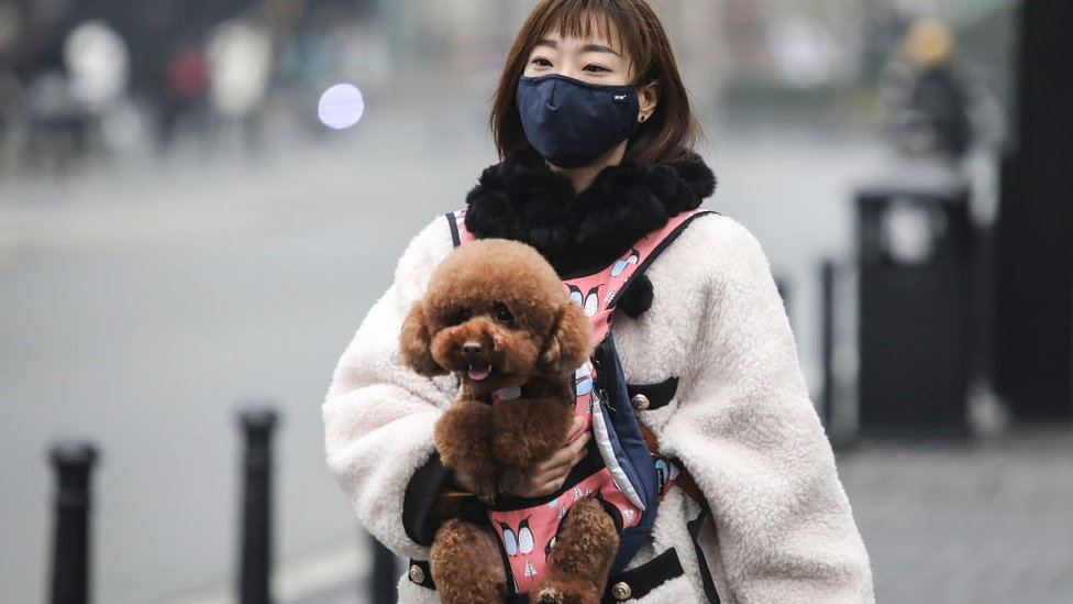 Una mujer usa una máscara mientras llevaba un perro en la calle en Wuhan, China