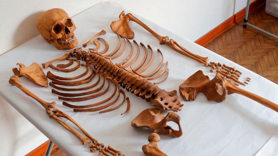Esqueleto de Wayaw
