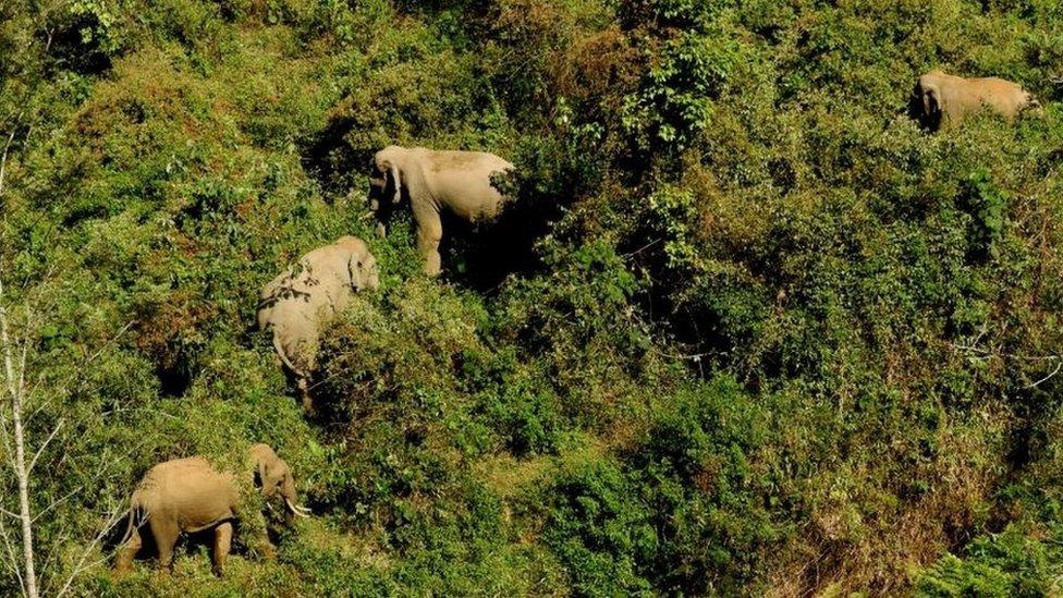 A group of elephants in the Nilgiri Biosphere Reserve