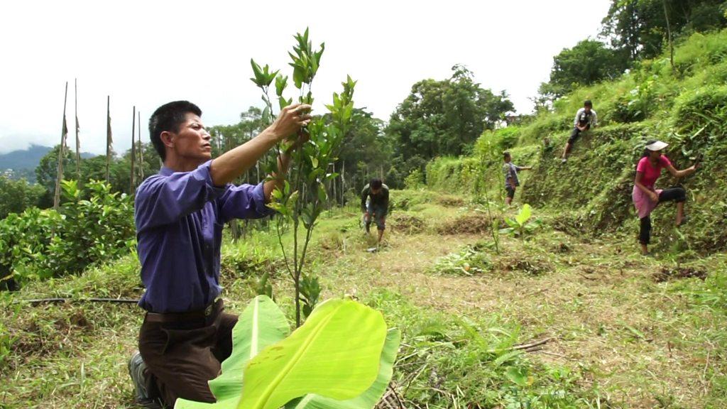 Will organic revolution boost farming in India?