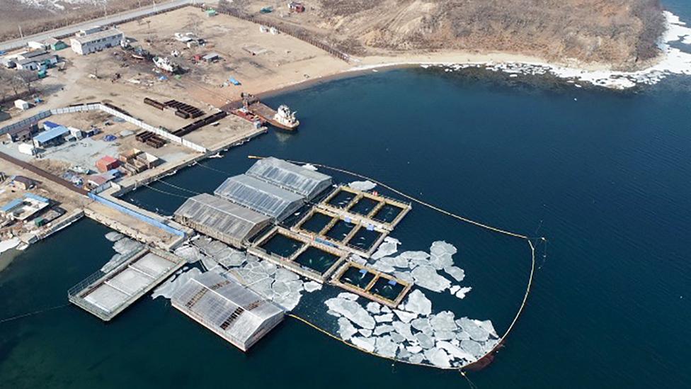 Imagen de los corrales de ballenas tomada desde el aire el 1 de marzo de 2019