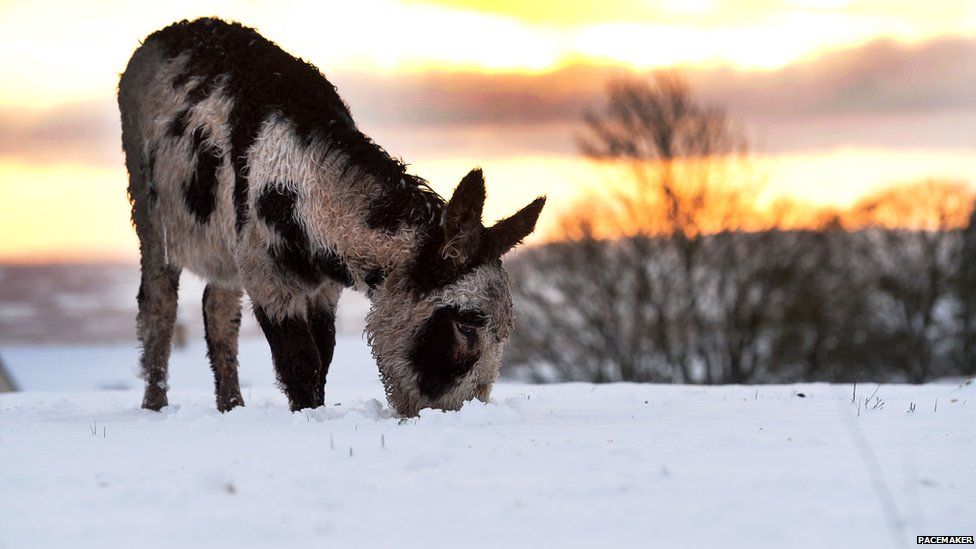A donkey in the snow