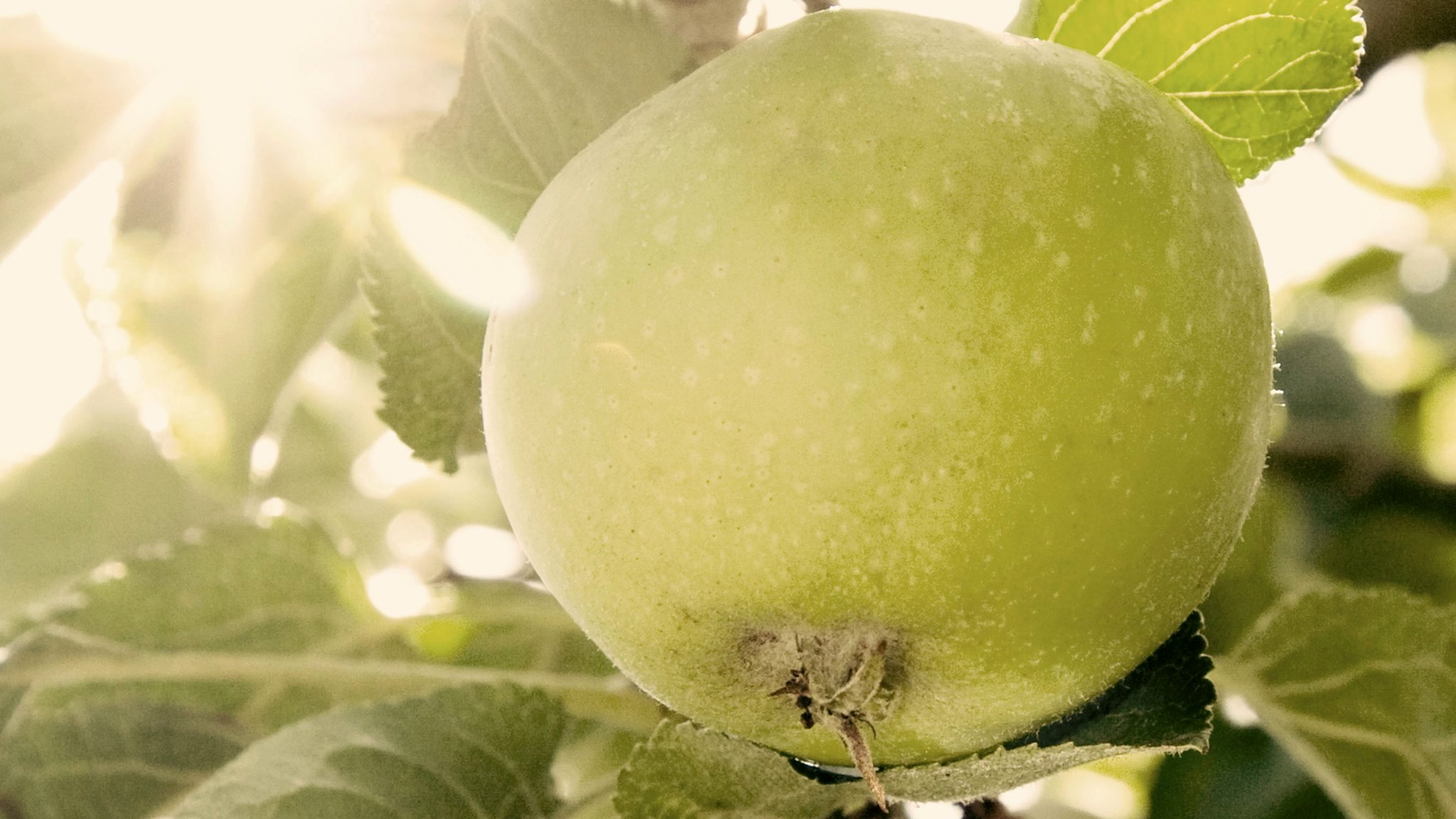 Who was the real Granny Smith?