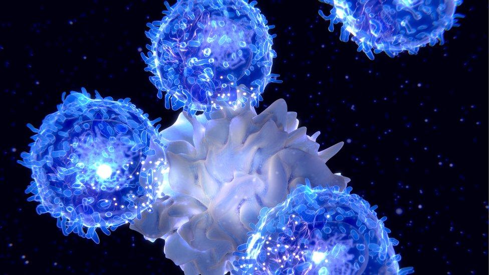 Linfocitos atacando a un agente externo