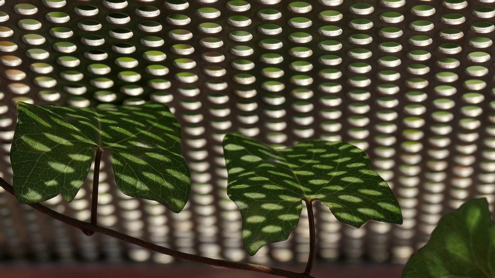 Sunlight and shadows on leaves