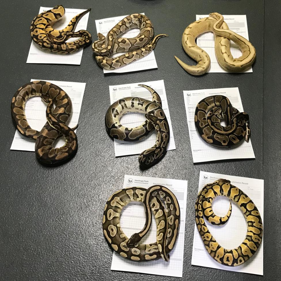 Snakes on the floor