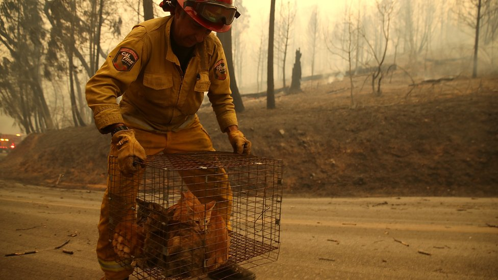 Vatrogasac nosi kavez sa mačkama