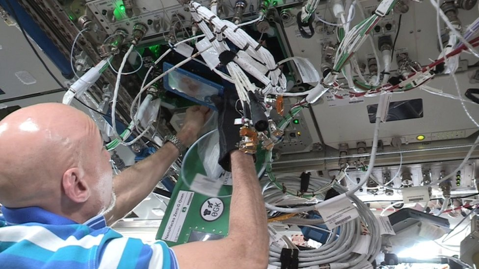 كان الهدف من التجربة فحص خيارات إعداد الغذاء لرحلات فضائية طويلة الأمد..