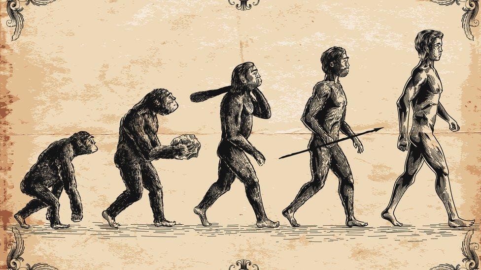 Los humanos y los simios tienen ancestros en común.