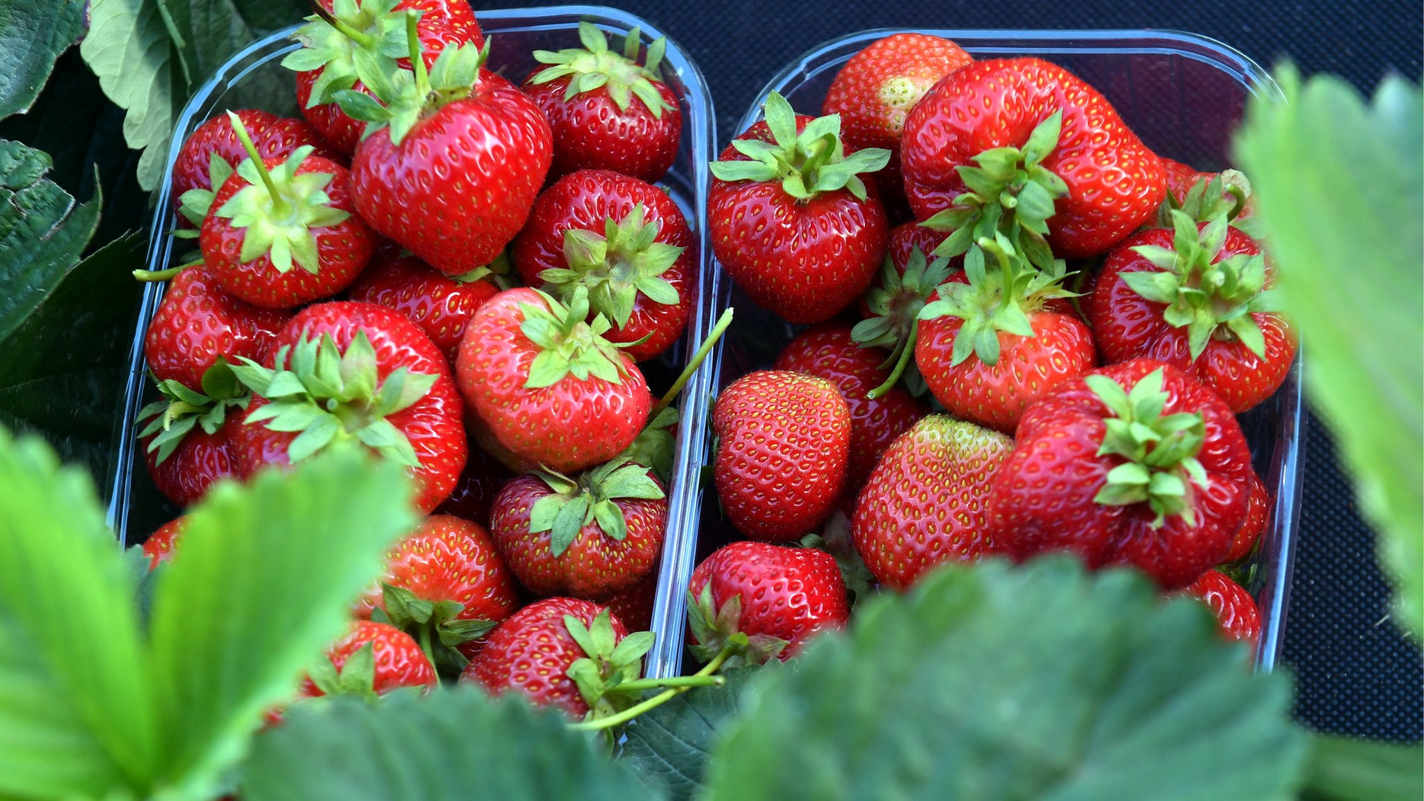 Three arrested over 'large scale' Kent strawberry thefts