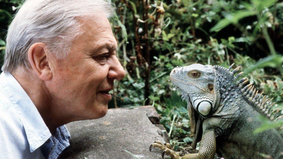 Sir David Attenborough with iguana