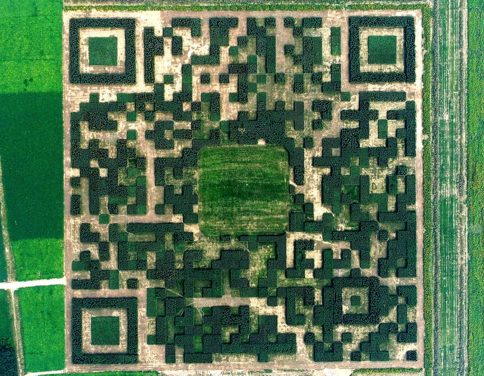 A giant QR code promoting local tourism is formed from 130,000 Chinese juniper trees in Xilinshui, Hebei province