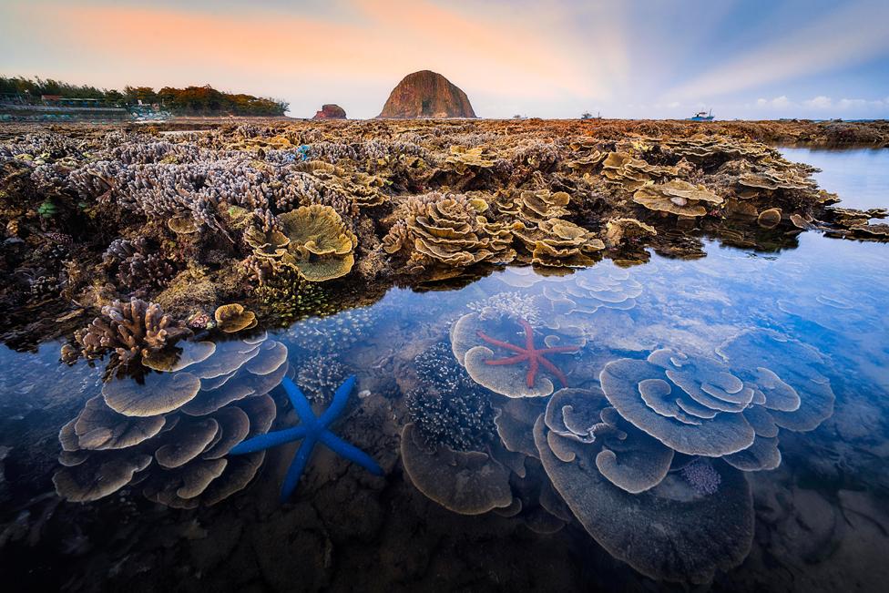 Morski ekosistem Hon Jen u Fu Jenu, Vijetnam