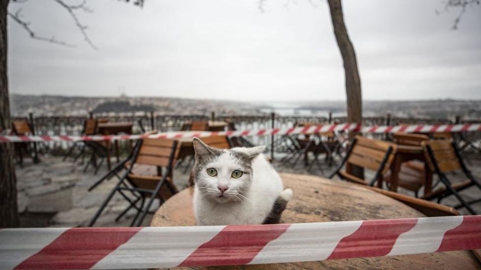 mačka ispred zatvorenog restorana u istanbulu