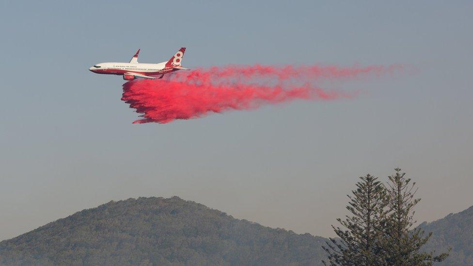 Pesawat menjatuhkan bahan anti api di dekat kota Forster.