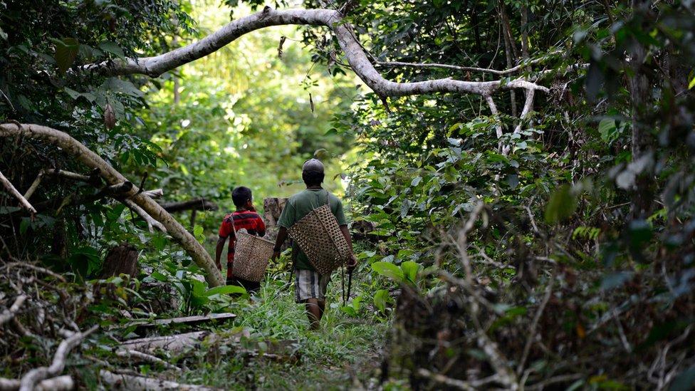 Indígenas jamamadi caminham pela mata com grandes cestos de palha nas costas