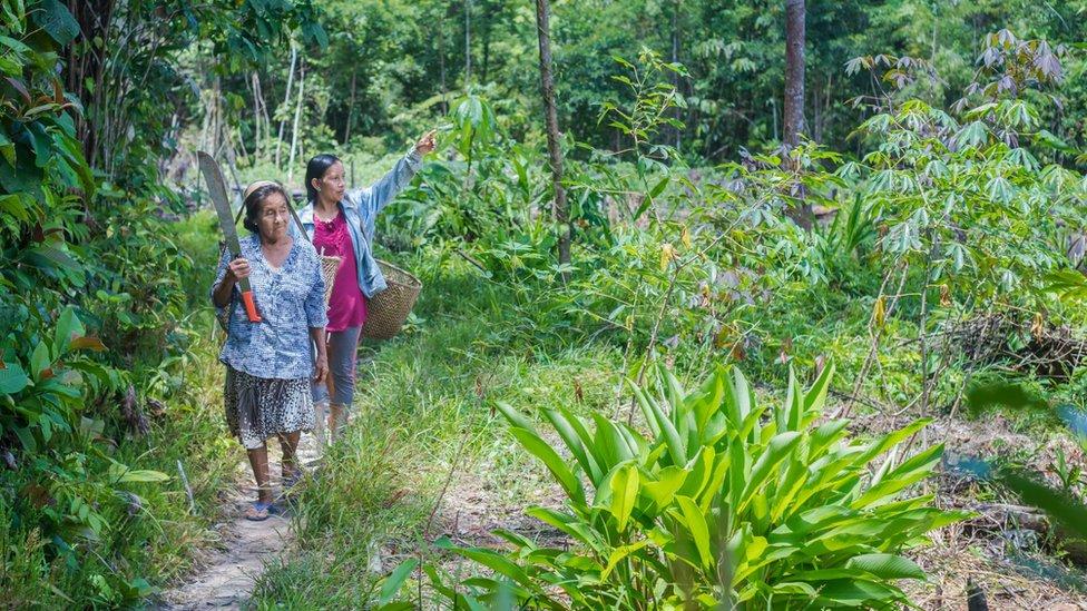 Liz Chicaje Churay y mienbros de su comunidad caminando para cosechar yuca