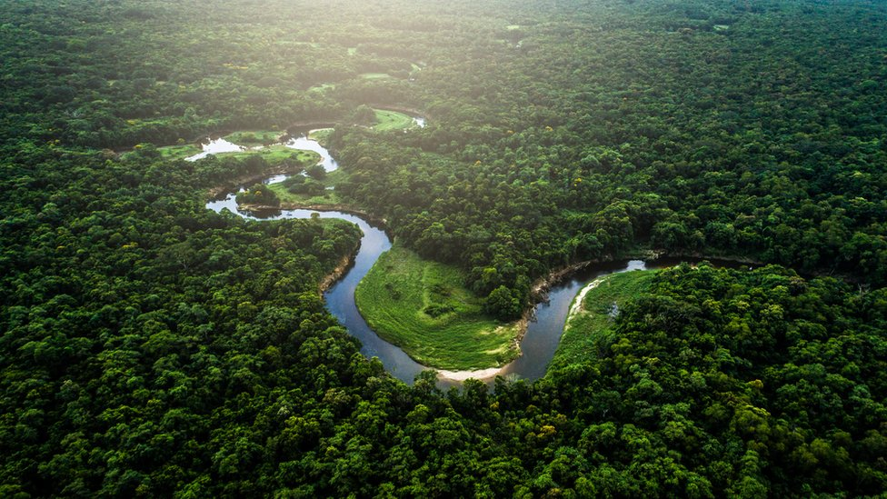 Forests provide an important carbon sink for mitigating climate change