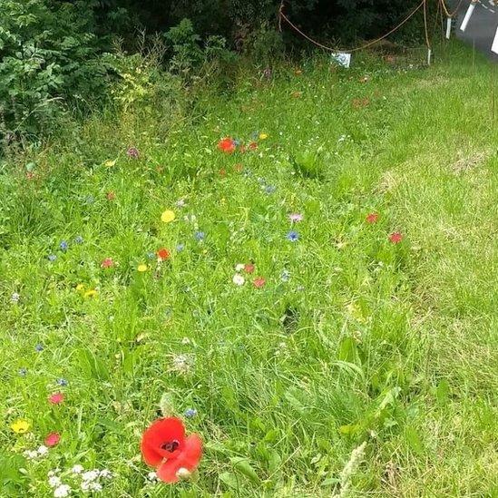Wildflowers on a verge
