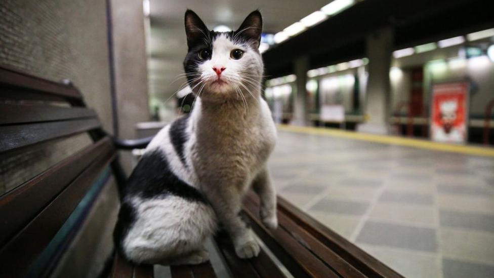 mačka u metrou