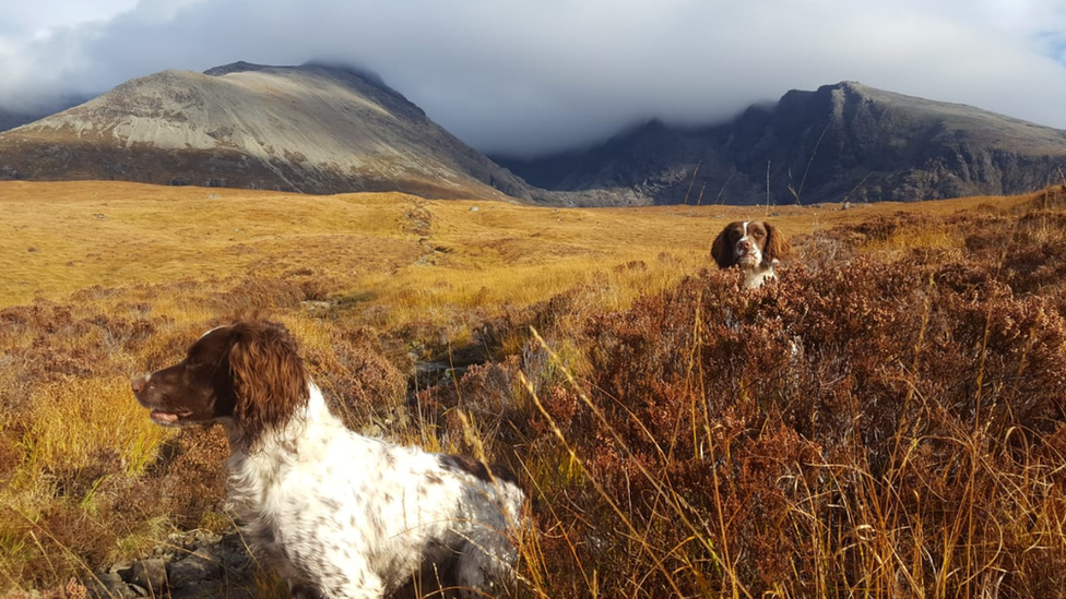 Lisa and Andy Goldie from Edinburgh sent in this picture of Scarpa and her pup Sherpa basking in the autumn light at the Cullins on the Isle of Skye.