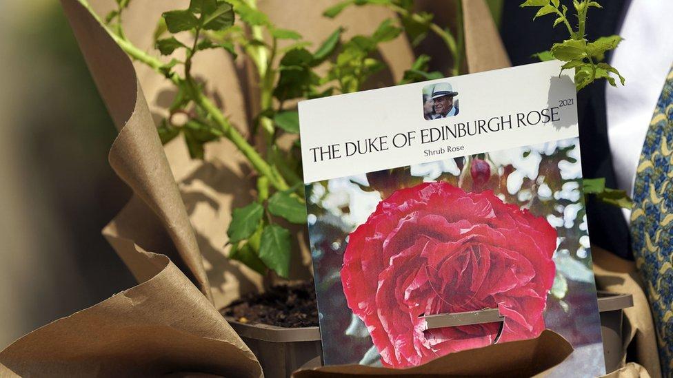 La Rosa del Duque de Edimburgo