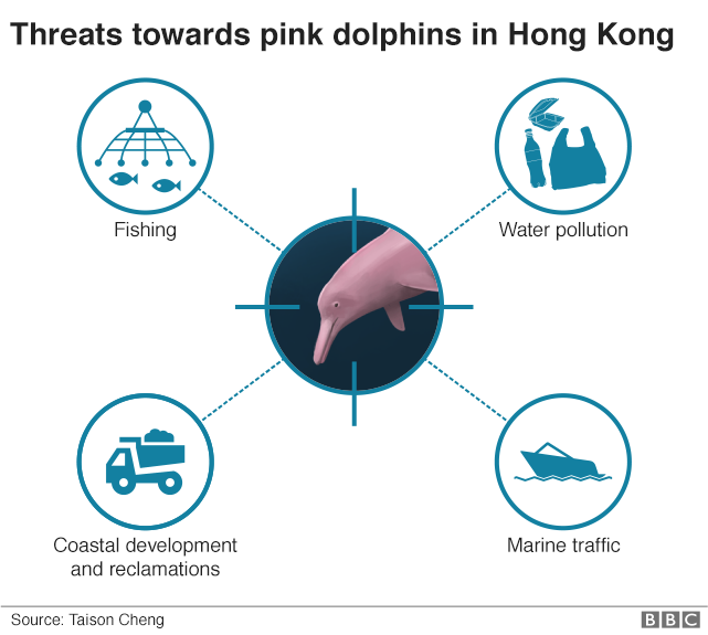 An infographic showing the threats pink dolphins face