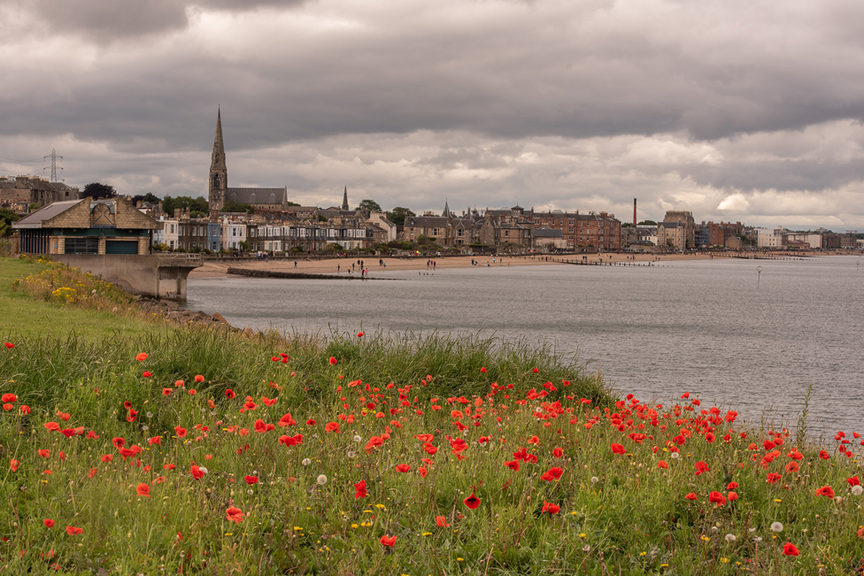 Poppies in the foreground in front of a coastline and buildings in the distance