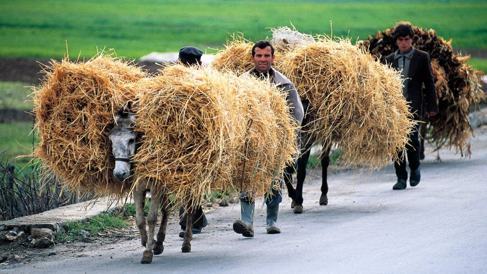 阿爾巴尼亞的驢