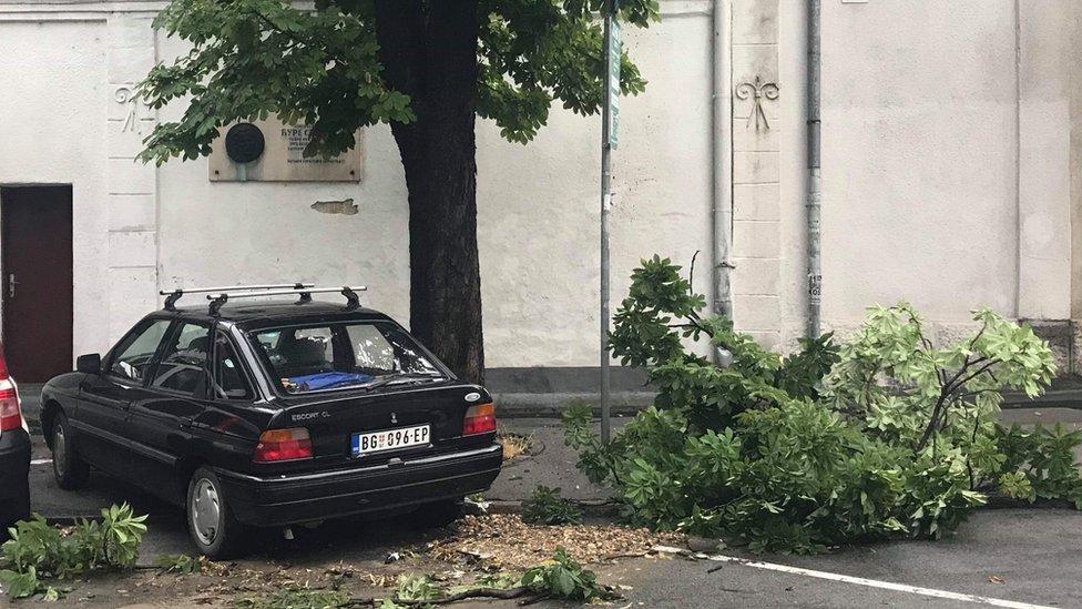 drvo na ulici