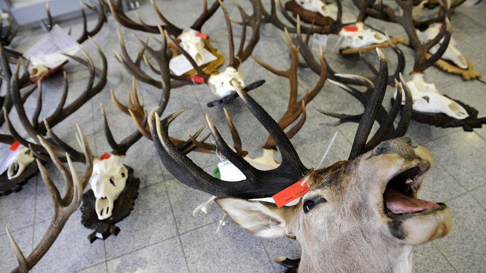 Hunting trophies on floor