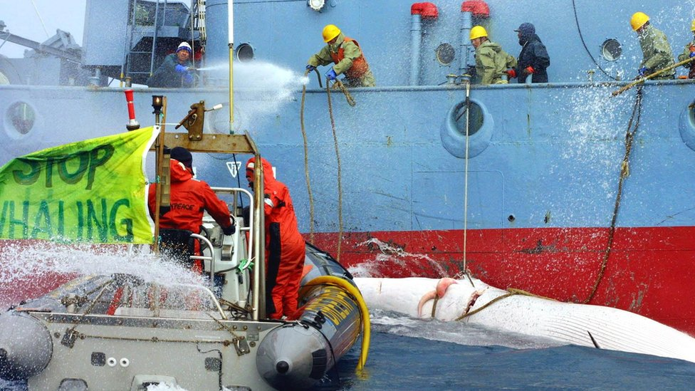 "Greenpeace activists (L) in an inflatable dingy are hit with high powered water hoses as they impede the transfer of whales from a ""catcher"" ship to the Japanese whaling factory ship, Nisshin Maru, in the Southern Ocean off Antarctica, on 21 December 2001"