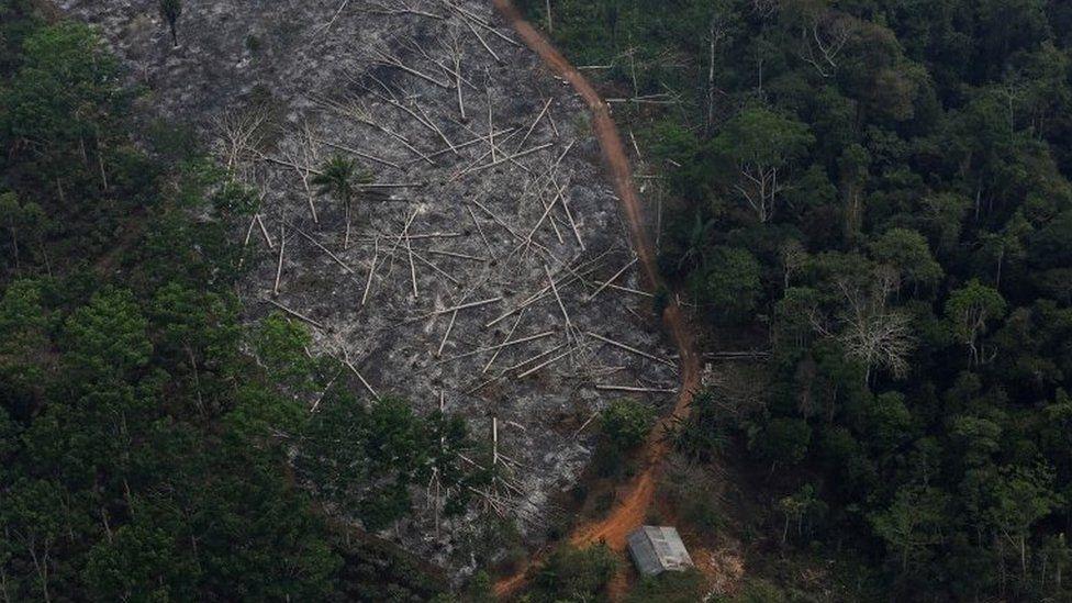 مساحة في إحدى الغابات قطعت أشجارها