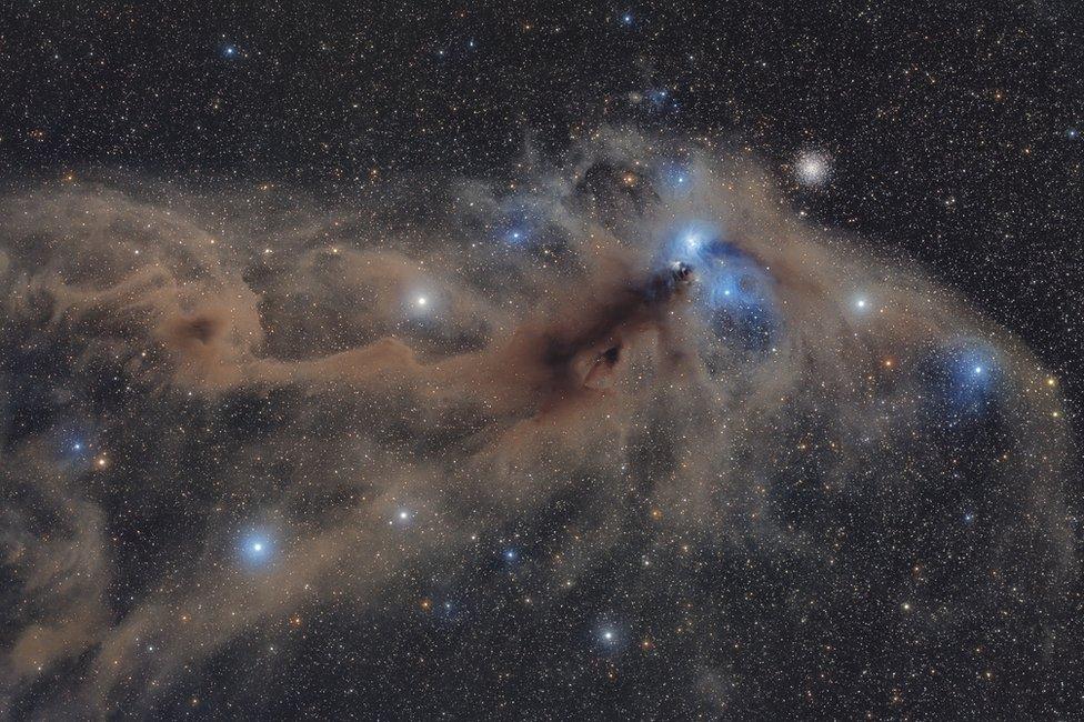 Corona Australis Dust Complex