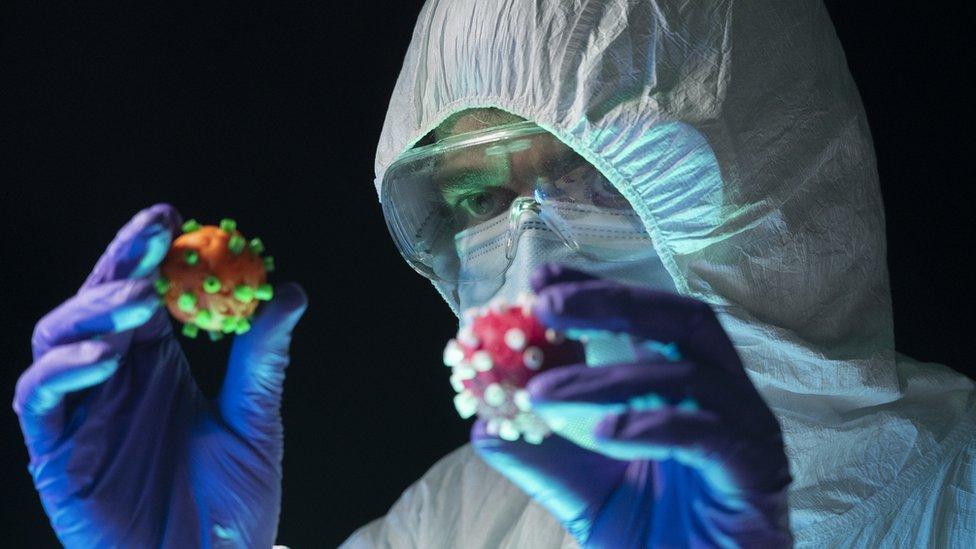 Un científico en traje protector examina dos modelos diferentes de coronavirus