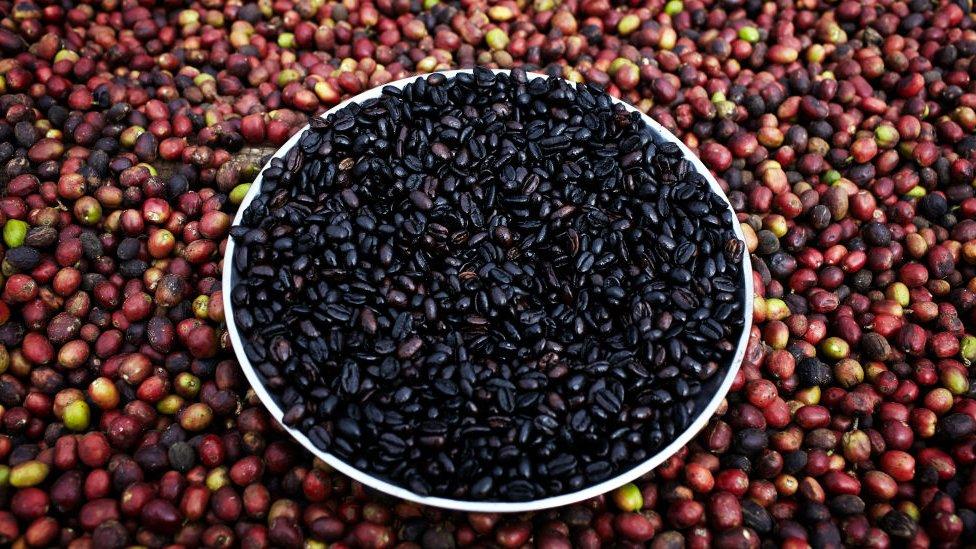 Café en Etiopía